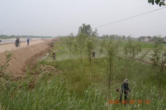 督查局对林木管护情况进行督导检查